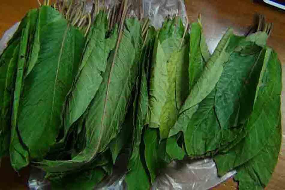 Cottage leaves