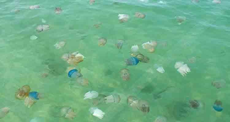 Jellyfish poison one